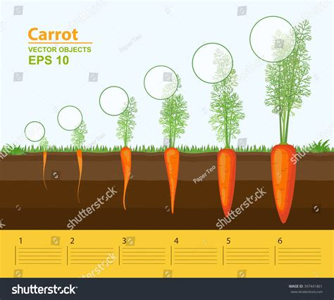 Growth Stages Of Vegetable Pictures to Pin on Pinterest