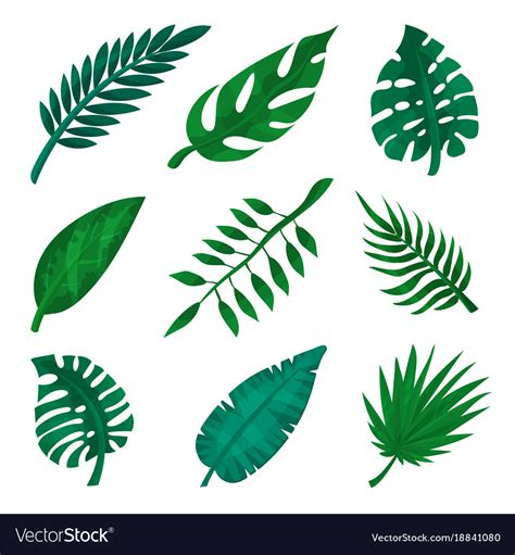 Leave Set green tropical leaf set palm leaves royalty free vector