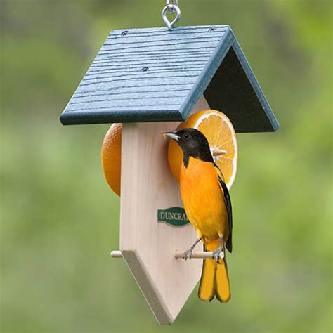 duncraft com duncraft 4238 orange fruit feeder