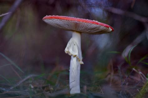 best psychedelic mushrooms psychedelic pentaxforums