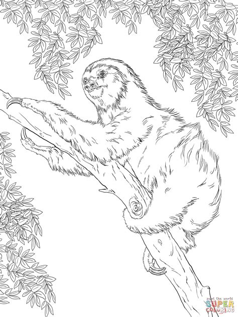 two toed sloth on tree coloring page free printable