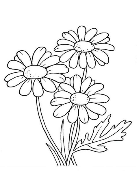 printable daisies flowers daisy flower coloring pages download and print daisy