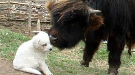 puppy kingdom puppies vs animal kingdom barkfest nat geo
