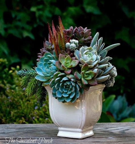 succulent arrangements succulent arrangement green flower pinterest