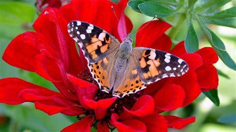 google images flowers flower images google search papillons pinterest