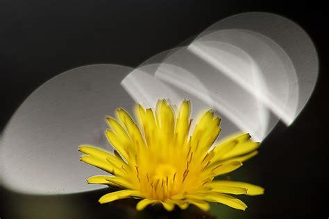 Lensa Bunga Canon memotret bunga cara menciptakan lu sorot lingkaran bokeh yang cemerlang dengan lensa makro