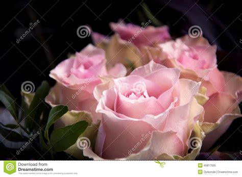 light up red roses light pink roses closeup on a black background stock image