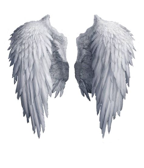 white angel wings png wattpad stuff pinterest angel