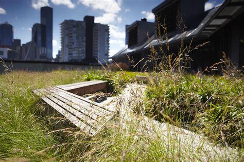 green roofs  energy efficiency