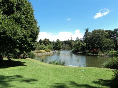 Black Swan Picture Of Royal Botanic Gardens Melbourne Hotels Near Royal Botanic Gardens Melbourne