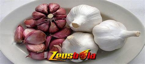 khasiat bawang merah  bawang putih  ayam aduan zeusbola