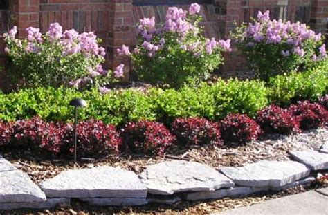 Backyard Bushes low maintenance shrubs for backyard interior design inspiration