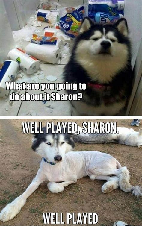 The 25  best Funny dog pictures ideas on Pinterest   Cute