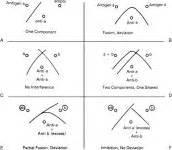 xsl identity pattern fundamental immunology