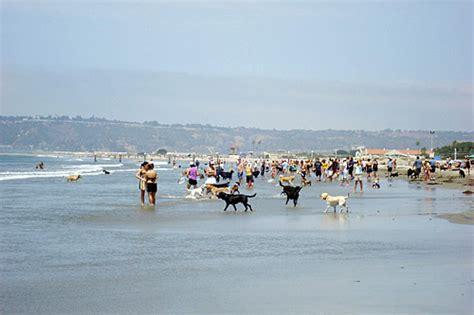 friendly beaches san diego coronado s makes quot top ten pet friendly beaches quot list coronado common sense