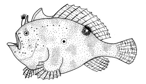 swedish fish coloring page spotfin frogfish