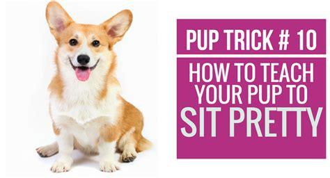 how to your to sit pretty pupcorner where we live for puppies pupcorner