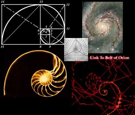 the golden section in nature fibonacci spiral in nature the golden ratio is