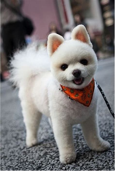 dog cut styles 30 different dog grooming styles tail and fur