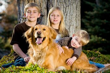 why golden retrievers are the best 15 reasons why golden retrievers are the best dogs