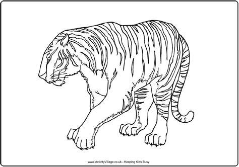 chinese tiger coloring page 72 dessins de coloriage tigre 224 imprimer sur laguerche com