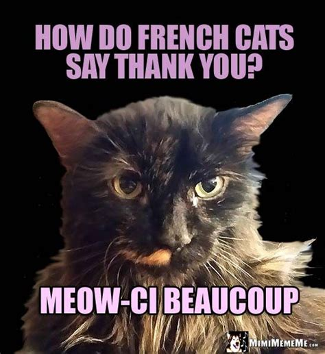 pretty kitty asks how do french cats say thank you meow