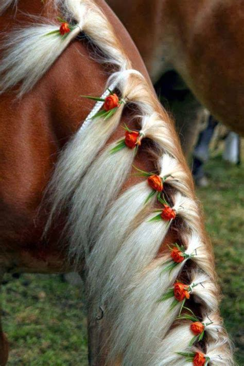 Hairstyles For Horses | cool hairstyles for horses xcitefun net