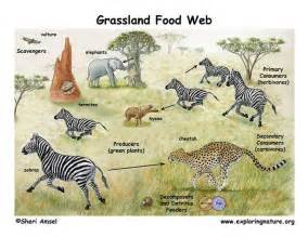 Tropical Rainforest Animals And Plants Adaptations - 22 best images about animals and their habitats on pinterest trump card animal classification