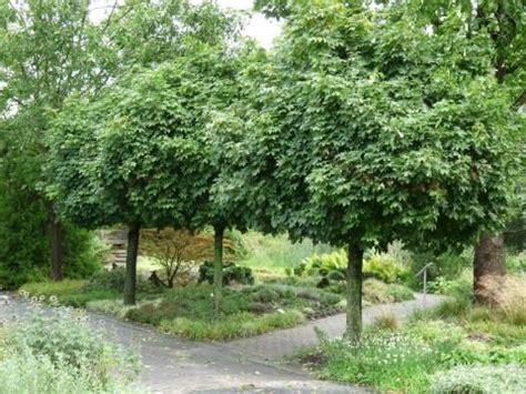 Mein Garten Und Ich 4991 by Hausb 228 Ume F 252 R Kleine G 228 Rten Garden Ideas
