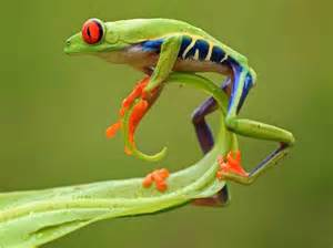 do tree frogs change color 2015 automobiles html autos post