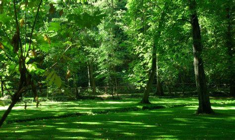 imagenes de bosques verdes fondo pantalla bonito bosque