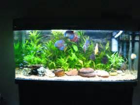 image discus aquarium 4 Attached image discus aquarium 5