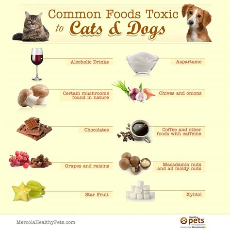 food for dogs human foods toxic to dogs dangerous foods to dogs