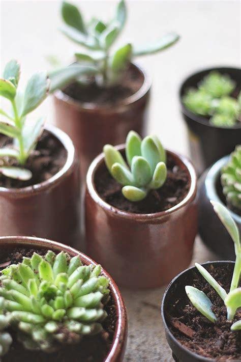 Pot Bunga Bonjour Mini bonjour hortensia comment rempoter les plantes