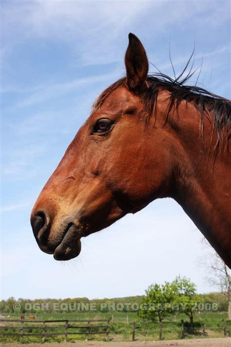 For Horses horses