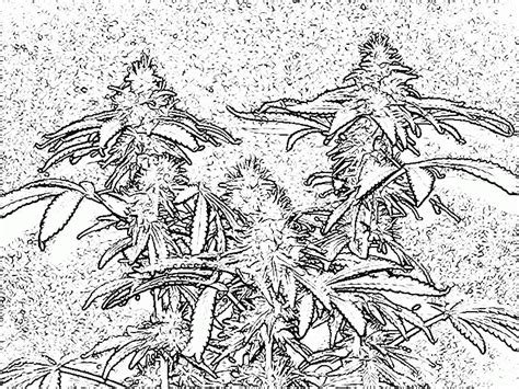 weed leaf coloring pages pot leaf coloring page coloring home