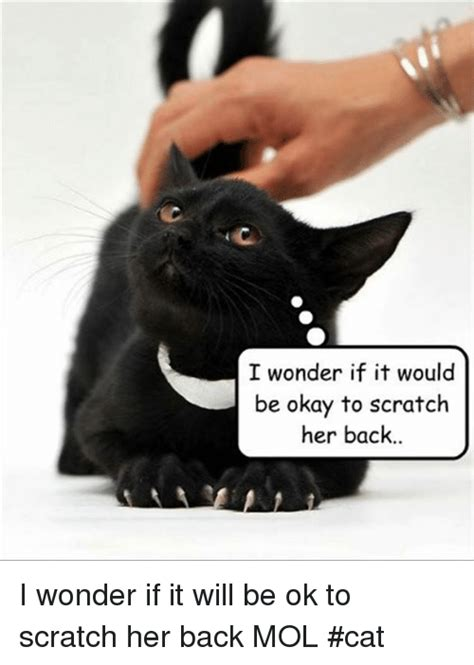 Back Scratch Meme