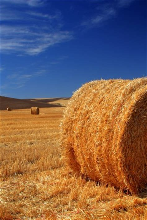 hay bale high resolution wallpaper hd wallpapers