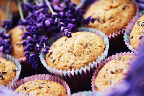 muffins kuchen lavendel muffins kuchen beliebte rezepte f 252 r kuchen und