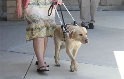 how to seeing eye dogs what s the difference between guide dogs and seeing eye dogs