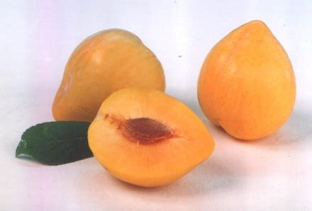 orange colored fruit orange colored fruit names