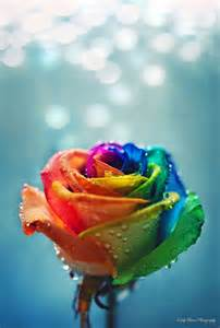 Flowers In Idaho Falls - rainbow rose with raindrops in morning technicolor roses
