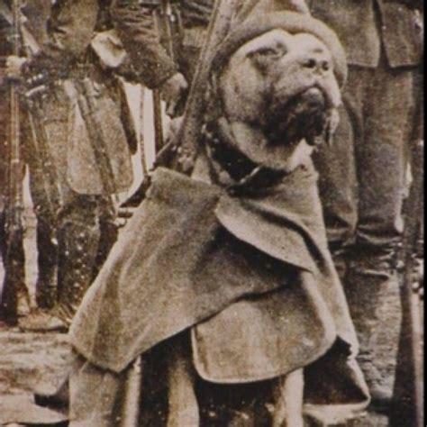 Sgt Stubby Pitbull 55 Best K9 Images On Dogs Working Dogs And War Dogs