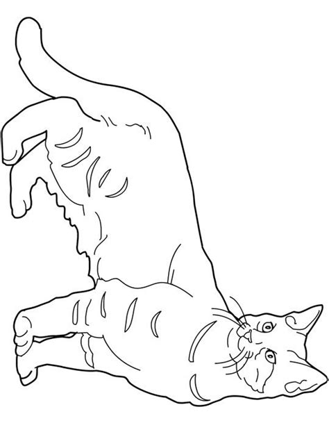 large print coloring book of kittens and cats a simple and easy kittens and cats coloring book for adults for stress relief and relaxation easy coloring books for adults volume 6 books 79 fantastiche immagini su favorite cat colouring pages su
