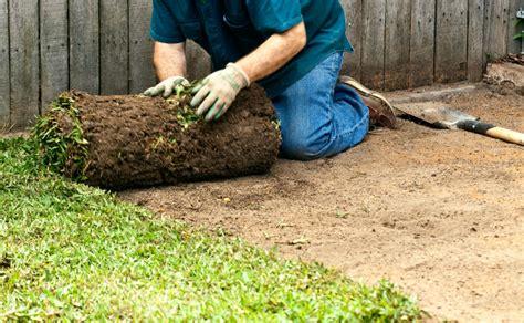 laying turf burke s backyard
