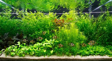 style aquascape aquascaping styles by george farmer uk aquatic plant society