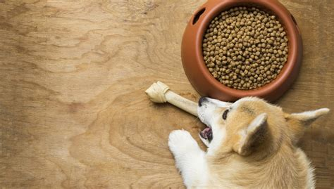 best food for dogs best food for corgis how and what to feed corgis