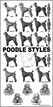 different styles of hair cuts for poodles poodle grooming on pinterest standard poodles dog