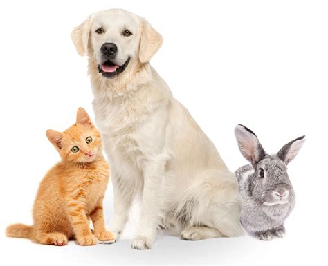 puppy insurance pet insurance get your pet insurance through pets at home