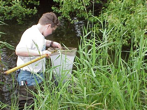 upcoming workshops insect sling in the rogue river